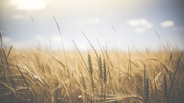 Converge-Heartland-Harvest-thumbnail
